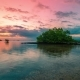 Mangrove Tree in Low Tide on the Sunset in Nusa Lembongan, Bali, Indonesia