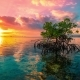 Ocean at Colorful Bright Sunset with Clouds and Reflection of a Mangrove Tree in Water in Nusa