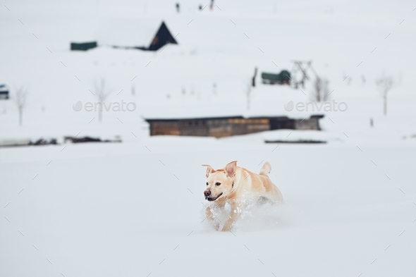 Wintertime with dog - Stock Photo - Images