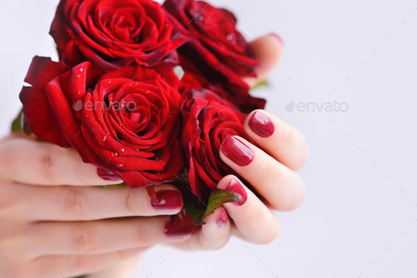 Hands of a woman with dark red manicure with a bouquet of red ro - Stock Photo - Images