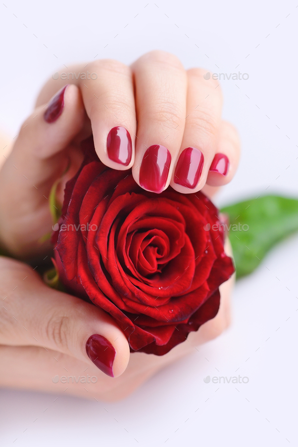 Hands of a woman with red manicure with red rose on white backgr - Stock Photo - Images