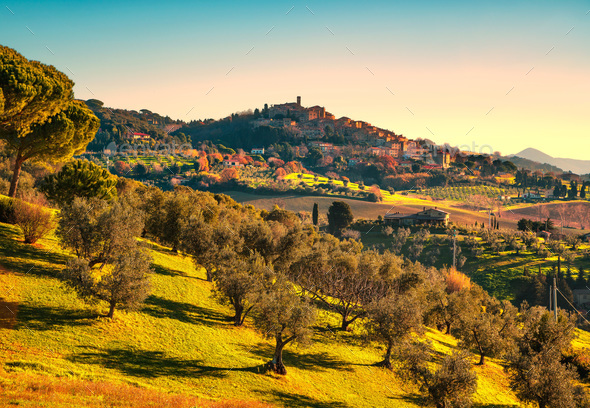 Casale Marittimo village and olive trees in Maremma. Tuscany, It - Stock Photo - Images