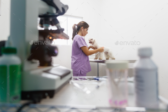 Woman Working As Doctor In Clinic With White Dog - Stock Photo - Images