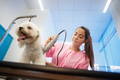 Healthy Dog In Pet Shop With Woman Trimming Hair - PhotoDune Item for Sale