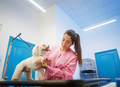 Girl At Work In Pet Store And Grooming Dog - PhotoDune Item for Sale