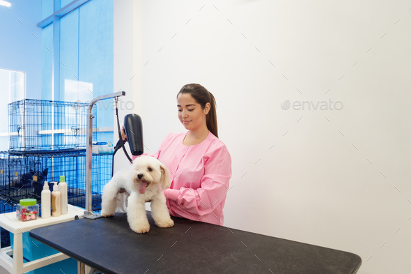 Woman At Work In Pet Store And Grooming Dog - Stock Photo - Images