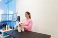 Woman At Work In Pet Store And Grooming Dog - PhotoDune Item for Sale