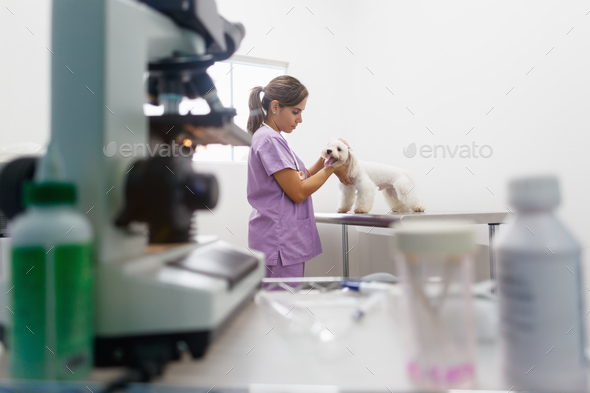 Veterinary Visit In Clinic With Vet And Sick Dog - Stock Photo - Images