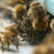 Bees Are Swarming at a Beehive Entrance in Summer. They Brought Pollen - VideoHive Item for Sale