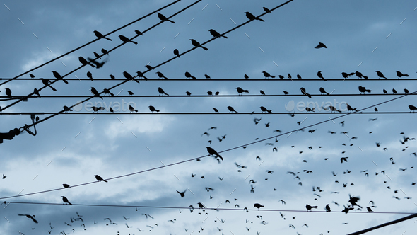 Large Flock Birds on a Wire Urban City Skyline Electrical Lines - Stock Photo - Images