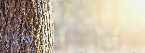 Tree trunk banner - Stock Photo - Images