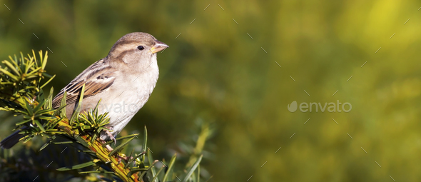 Bird banner or background idea - Stock Photo - Images