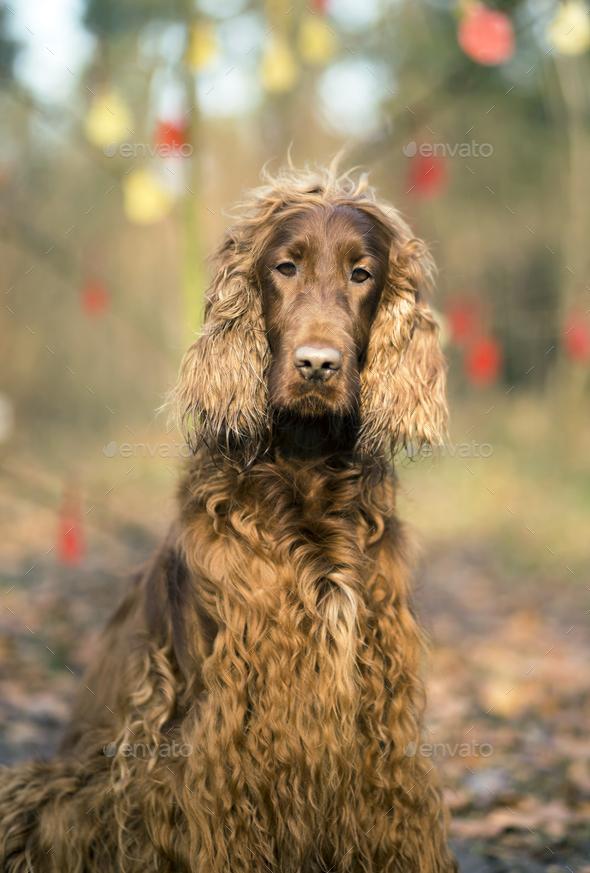 Cute dog portrait vertical - Stock Photo - Images