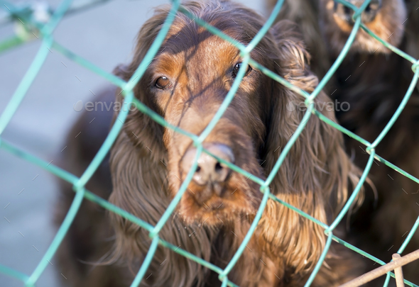 Dog behind fence - Stock Photo - Images