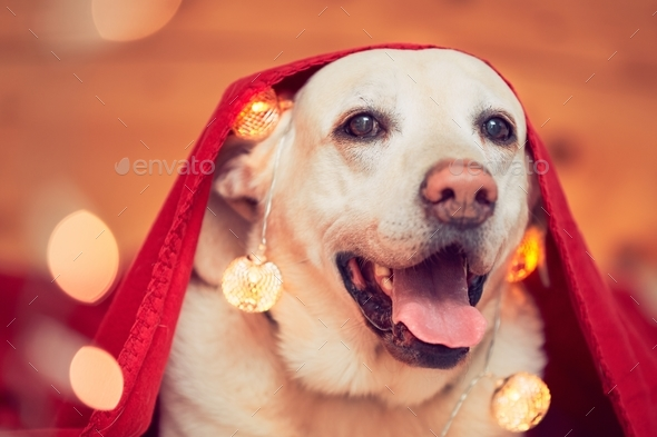Celebrations with cute dog - Stock Photo - Images