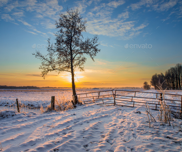 Tree in Winter Landscape - Stock Photo - Images