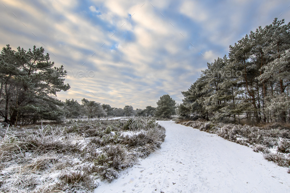 Winter forest landscape Assen Drenthe - Stock Photo - Images