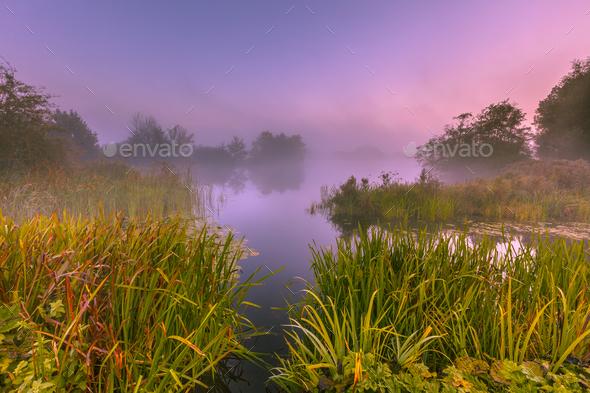 Foggy Marshland - Stock Photo - Images