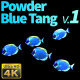 Powder Blue Tang 1 - VideoHive Item for Sale