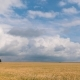 Landscape of Wheat Field at Harvest - VideoHive Item for Sale