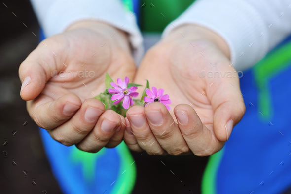 Closeup pink flowers in children's hands - Stock Photo - Images