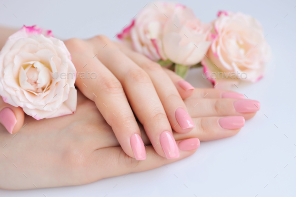 Hands of a woman with pink manicure on nails and roses - Stock Photo - Images