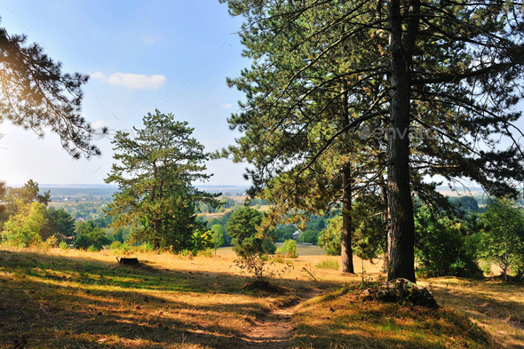 Beautiful autumn landscape with pine trees on a sunny day - Stock Photo - Images