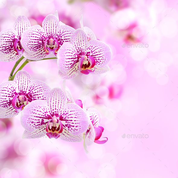 Floral background of tropical orchids - Stock Photo - Images
