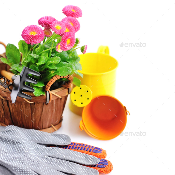 Marguerite flowers and garden tools on a white background - Stock Photo - Images