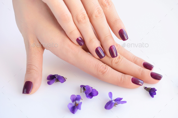 Hands of a woman with dark purple manicure on nails and flowers - Stock Photo - Images