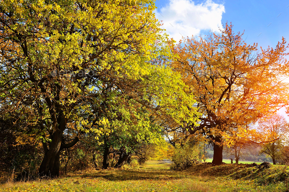 Beautiful autumn landscape with colorful trees. Sunny day - Stock Photo - Images