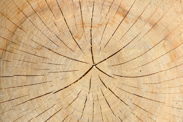 Wood texture of tree stump with cracks in brown tone for backgro - Stock Photo - Images