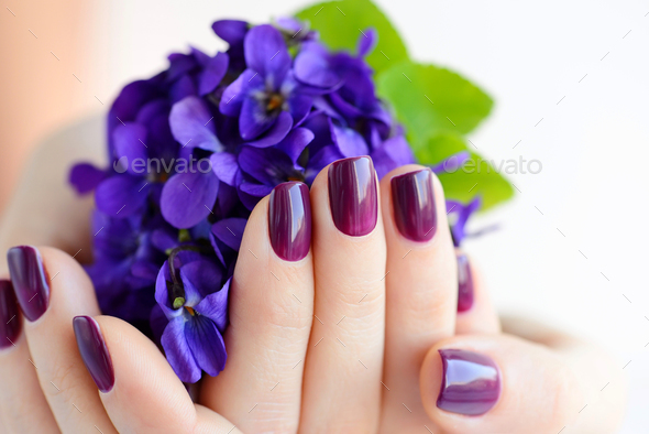 Hands of a woman with dark purple manicure on nails and bouquet - Stock Photo - Images