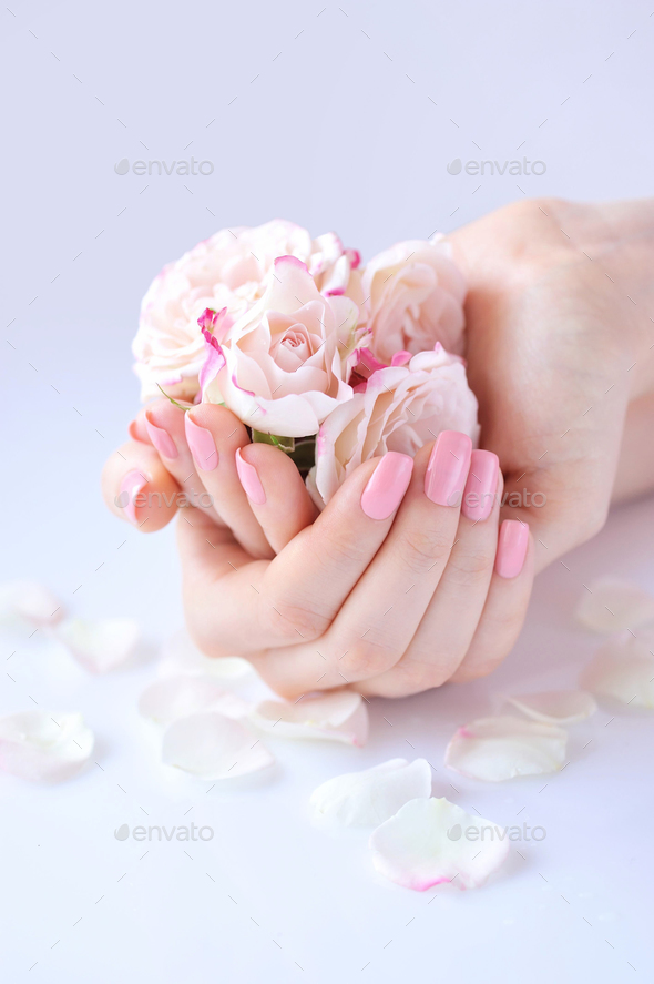 Hands of a woman with pink manicure on nails and roses against w - Stock Photo - Images