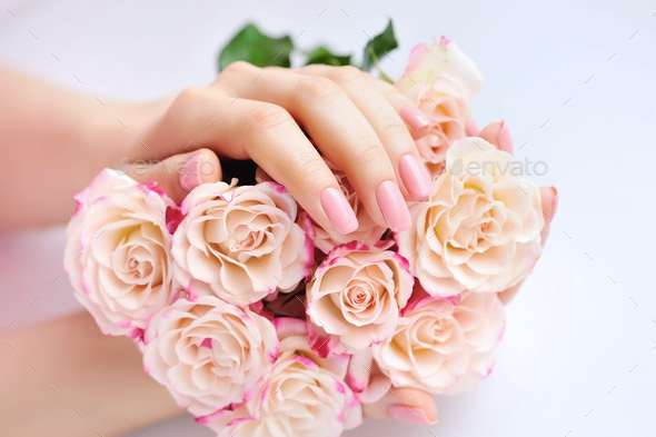 Hands of a woman with pink roses against white background - Stock Photo - Images