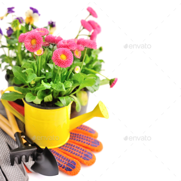 Gardening tools and spring flowers on a white background - Stock Photo - Images