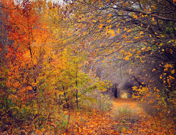 Pathway through the autumn forest - Stock Photo - Images