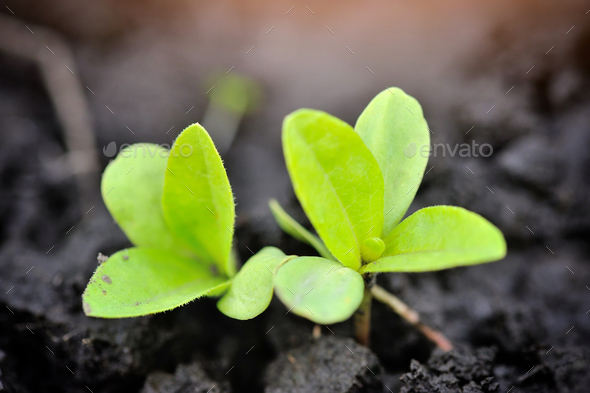 Young sprout in the garden in spring. Selective focus - Stock Photo - Images