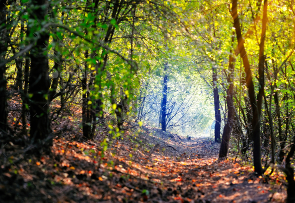 Beautiful day in the autumn forest with sun rays - Stock Photo - Images
