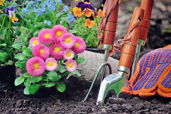 Gardening tools and spring flowers in the garden - Stock Photo - Images