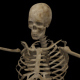 Skeleton Dance (7-Pack) - VideoHive Item for Sale
