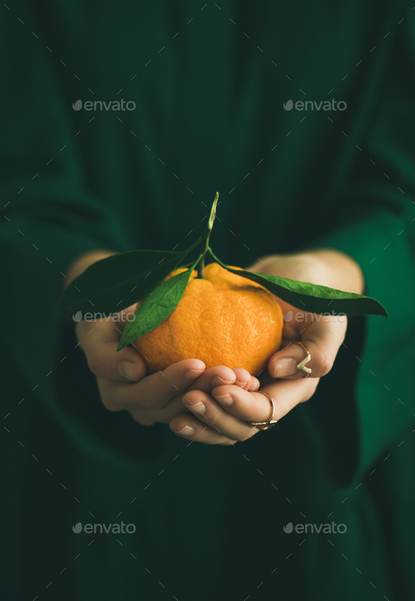 Fresh raw tangerine fruit in hands of lady, copy space - Stock Photo - Images