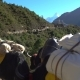 Porters and Yaks on the Trail in the Himalayas - VideoHive Item for Sale