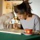 The Artist Tries To Paint a Picture at Home, but Her Gray Cat Prevents Her From Doing This - VideoHive Item for Sale
