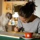 The Artist Tries To Paint a Picture at Home, but Her Cat Prevents Her From Doing This - VideoHive Item for Sale