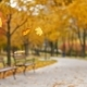 Leaves Falls in Autumn Park - VideoHive Item for Sale