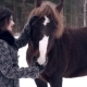 Beautiful Girl Feeding Horse in the Winter Forest - VideoHive Item for Sale