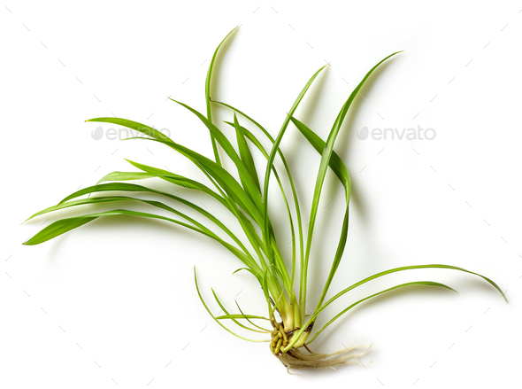 fresh green tropical leaf - Stock Photo - Images