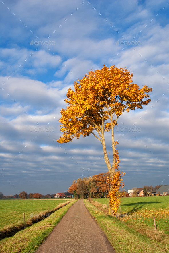 Autumn coloured tree - Stock Photo - Images