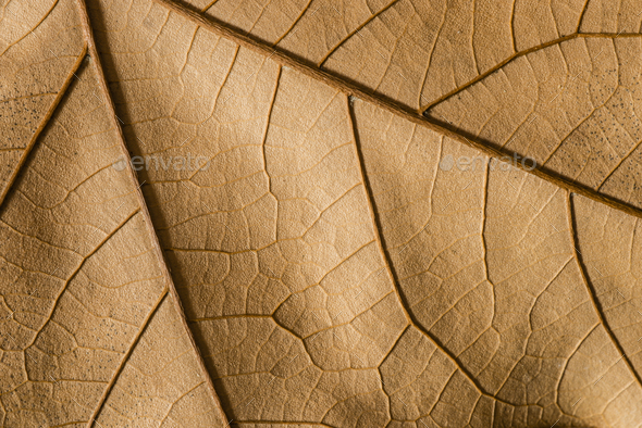 Close up of a tree dead leaf - Stock Photo - Images